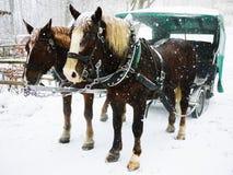 Carro del caballo en la nieve Foto de archivo