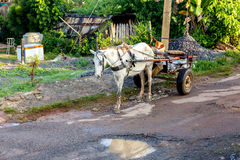 Carro del caballo en Vinales, Cuba Fotografía de archivo libre de regalías