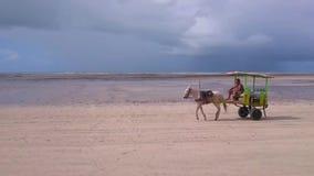 Carro del caballo que camina en la playa almacen de metraje de vídeo