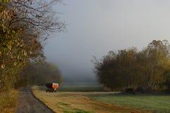 Carro del grano en octubre fotografía de archivo