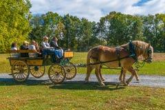 Carro del tirón de los caballos en el valle de Landis Foto de archivo