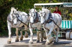 Carro del tirón de los caballos en la isla de Mackinac Fotografía de archivo libre de regalías