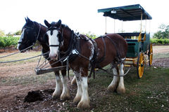 Carro desenhado cavalo Fotografia de Stock
