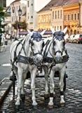 Carro do cavalo Foto de Stock Royalty Free