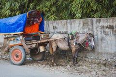 Carro do cavalo em Chitwan, Sauraha, Nepal fotografia de stock