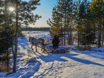 Carro do cavalo que corre na estrada da neve imagens de stock royalty free