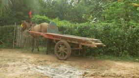 Carro do cavalo, transporte puxado a cavalo, transporte, cavalo filme
