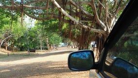 carro do espelho Imagem de Stock