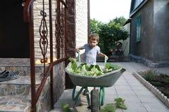 Carro do rolamento da criança com folhas da uva Foto de Stock