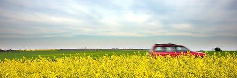Carro e campos amarelos Foto de Stock