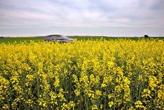 Carro e campos amarelos Imagem de Stock