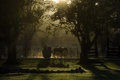 Carro e cavalo no por do sol mostrados em silhueta entre árvores, Cuba Imagens de Stock