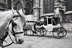 Carro em Viena Foto de Stock