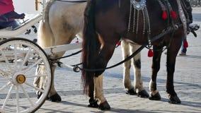 Carro en la plaza del mercado principal - primer del caballo almacen de video