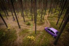 Carro na floresta do pinho. Imagem de Stock