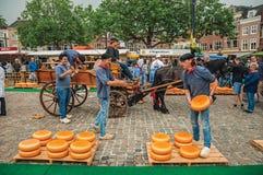 Carro que lleva de la gente joven con queso en el extremo de la feria de la plaza del mercado en Gouda Imágenes de archivo libres de regalías