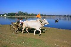 Carro que vai ao longo do lago, Amarapura do boi, Myanmar Fotografia de Stock Royalty Free