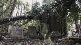 Carro tirado de cementerio judío con el matzevah almacen de video