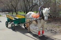 Carro traído por caballo blanco adentro Imagenes de archivo