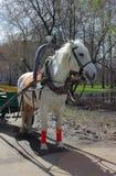 Carro traído por caballo blanco adentro Fotografía de archivo libre de regalías