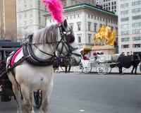 Carro traído por caballo de New York City Foto de archivo