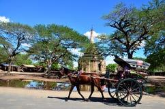 Carro traído por caballo del uso del viajero para el viaje alrededor de la ciudad antigua bagan Imagen de archivo