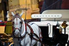 Carro traído por caballo en Córdoba, España Fotografía de archivo