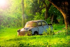 Carro velho de dano sob a árvore na luz solar da manhã imagem de stock royalty free