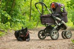Carro y perro de bebé Imagen de archivo libre de regalías