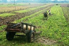 Carro y trabajador con el búfalo en la planta Foto de archivo libre de regalías
