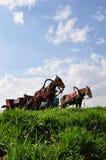 Carros del caballo imagenes de archivo