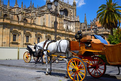 Carros del caballo de Sevilla en la catedral de Sevilla fotografía de archivo