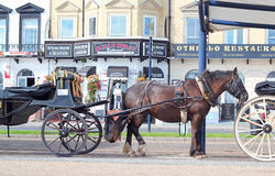 Carros del taxi del caballo en Great Yarmouth Fotografía de archivo