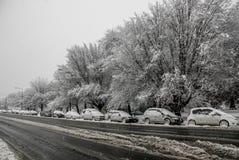 Carros e árvores cobertos na neve fotos de stock