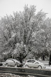 Carros e árvores cobertos na neve fotografia de stock royalty free