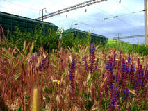 Carros ferroviarios con los wildflowers Foto de archivo libre de regalías