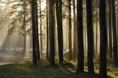 Carros na floresta fotos de stock royalty free