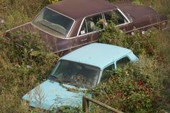 Carros cobertos de vegetação fotos de stock royalty free