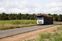 Carros para el transporte de la caña de azúcar imagen de archivo libre de regalías
