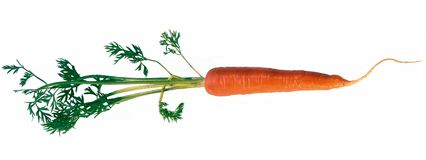Carrot. Isolated carrot Royalty Free Stock Photography