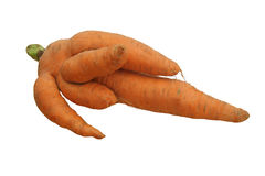 Carrot. Weird carrot isolated on white background Stock Photography