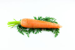 Carrot. A single Carrot on a white background Royalty Free Stock Image