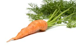 Carrot. Royalty Free Stock Photos