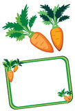 Carrot. Illustration of a bunch of four carrots Royalty Free Stock Photos