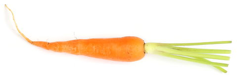 Carrot Royalty Free Stock Image