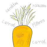 Carrot Royalty Free Stock Photography