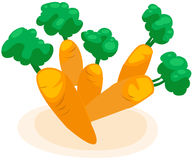 Carrot. Illustration of isolated carrot on white background Royalty Free Stock Photos
