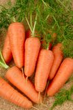 Carrot. Fresh carrots from market on a table Stock Photography