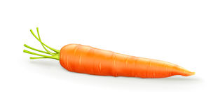 Carrot stock illustration