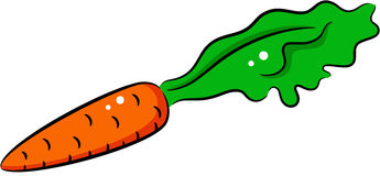 Carrot. Illustration of a raw carrot, isolated Royalty Free Stock Photos